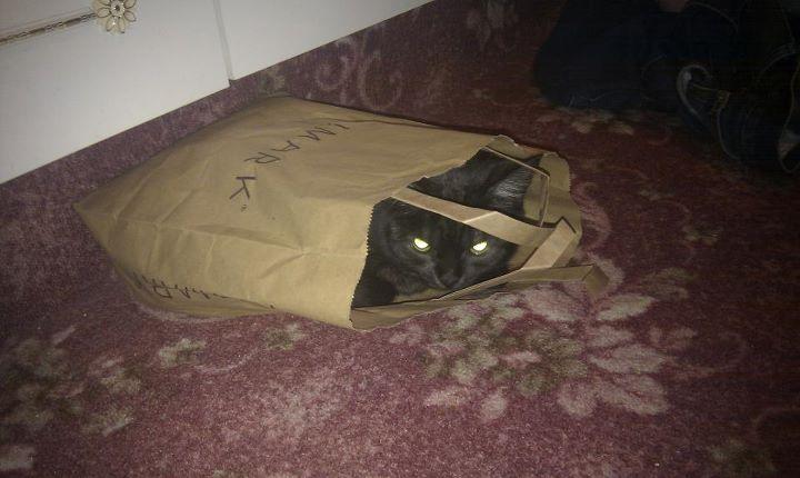 evil floppy