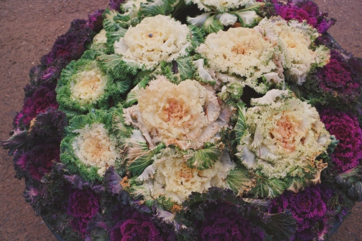 Cabbage used as floral arrangement.